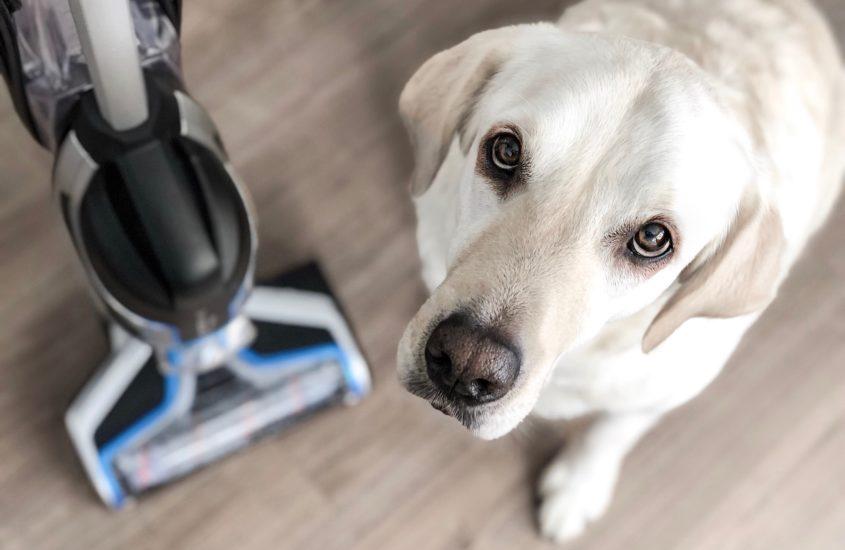 Unsere Erfahrung mit dem Bissell Pet Nasssauger