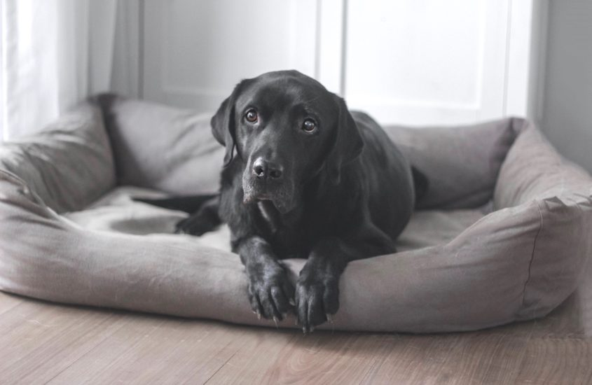 10 Tipps für ein schönes und sauberes Hundezuhause