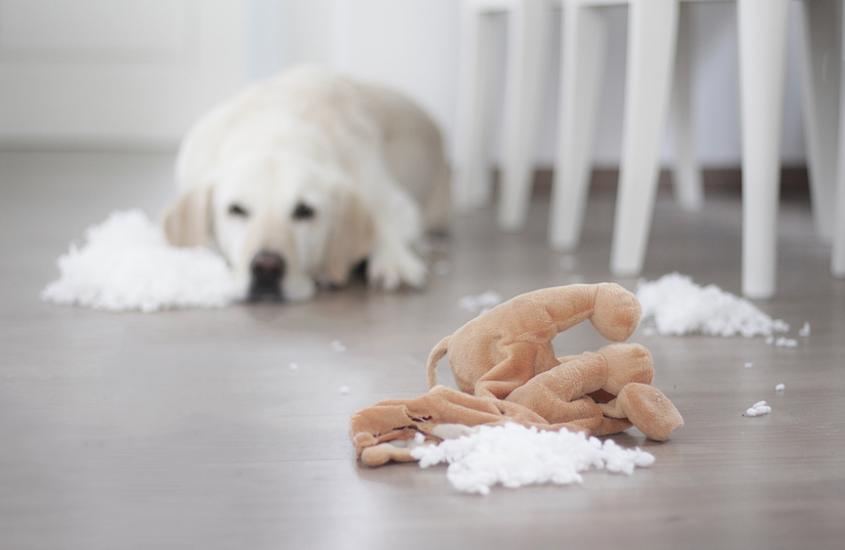Auf der sicheren Seite – dank Hundehaftpflichtversicherung