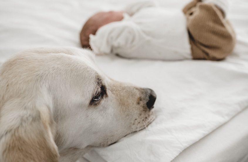 Hund & Baby   Wie läuft's denn so?